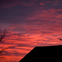 moreton sunset constant motion